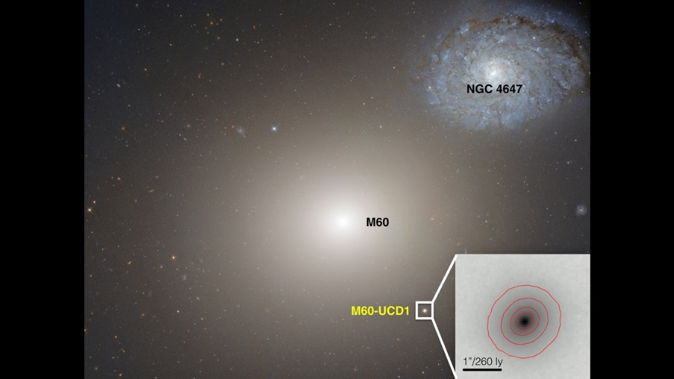 The ultracompact dwarf galaxy M60-UCD1 sits below the gargantuan galaxy M60 in this Hubble Space Telescope image.